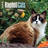 Ragdoll Cats - 2015 Calendar Calendars