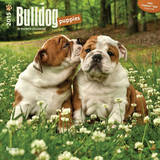 Bulldog Puppies - 2015 Calendar Calendars