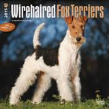 Wirehaired Fox Terriers - 2015 Calendar Calendars