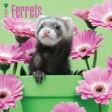 Ferrets - 2015 Calendar Calendriers