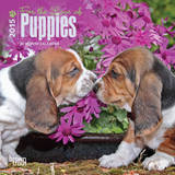For the Love of Puppies - 2015 Mini Calendar Calendars