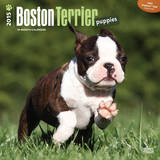 Boston Terrier Puppies - 2015 Calendar Calendars