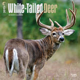 White-Tailed Deer - 2015 Calendar Calendars