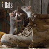 Rats - 2015 Calendar Calendarios