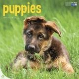 Puppies - 2015 Calendar Calendars