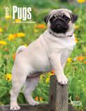Pugs - 2015 Engagement Calendar Calendars