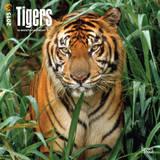 Tigers - 2015 Calendar Calendars
