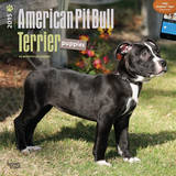 American Pit Bull Terrier Puppies - 2015 Calendar Calendars