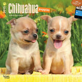 Chihuahua Puppies - 2015 Calendar Calendars