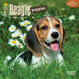 Beagle Puppies - 2015 Mini Calendar Calendars