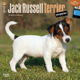 Jack Russell Terrier Puppies - 2015 Calendar Calendars