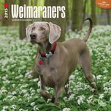 Weimaraners (Intl) - 2015 Calendar Calendars