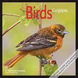 Canadian Geographic Birds - 2015 Calendar Calendars