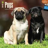 Pugs - 2015 Calendar Calendriers