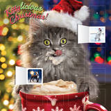 Avanti - Kittylicious Christmas - 2015 Advent Calendar Calendars