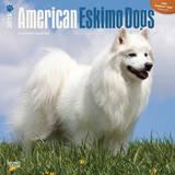 American Eskimo Dogs - 2015 Calendar Calendars