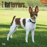 Rat Terriers - 2015 Calendar Calendars