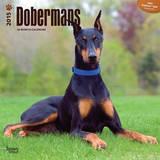 Dobermans - 2015 Calendar Calendars