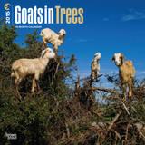 Goats in Trees - 2015 Calendar Calendars