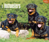 For the Love of Rottweilers - 2015 Deluxe Calendar Calendriers