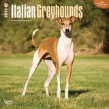 Italian Greyhounds - 2015 Calendar Calendars