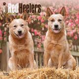 Red Heelers - 2015 Calendar Calendars