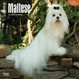 Maltese - 2015 Calendar Calendars