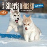 Siberian Husky Puppies - 2015 Mini Calendar Calendars