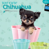 By Myrna - Too Cute Chihuahua - 2015 Calendar Calendars
