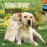 Yellow Labrador Retrievers - 2015 Calendar Calendars