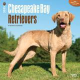 Chesapeake Bay Retrievers - 2015 Calendar Calendars