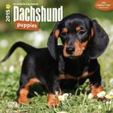 Dachshund Puppies - 2015 Mini Calendar Calendars