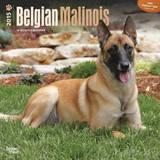 Belgian Malinois - 2015 Calendar Calendars