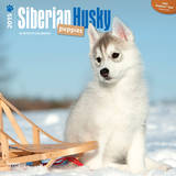 Siberian Husky Puppies - 2015 Calendar Calendars