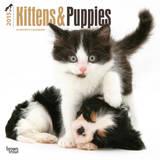 Kittens & Puppies - 2015 Calendar Calendars
