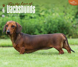 For the Love of Dachshunds - 2015 Deluxe Calendar Calendars