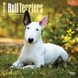 Bull Terriers - 2015 Calendar Calendars