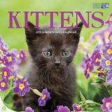 Kittens - 2015 Calendar Calendars