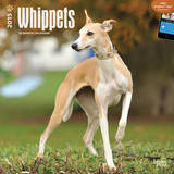 Whippets - 2015 Calendar Calendriers