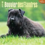 Bouvier des Flandres - 2015 Calendar Calendars