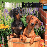 Miniature Dachshunds - 2015 Calendar Calendars