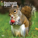 Squirrels - 2015 Calendar Calendars