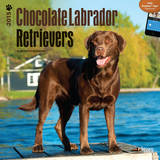 Chocolate Labrador Retrievers - 2015 Calendar Calendars