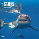 Sharks - 2015 Calendar Calendars