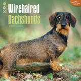 Wirehaired Dachshunds - 2015 Calendar Calendars