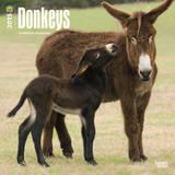 Donkeys - 2015 Calendar Calendars