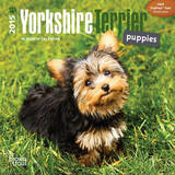 Yorkshire Terrier Puppies - 2015 Mini Calendar Calendars
