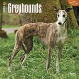 Greyhounds - 2015 Calendar Calendars