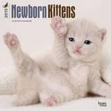 Newborn Kittens - 2015 Calendar Calendars