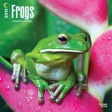 Frogs - 2015 Calendar Calendars